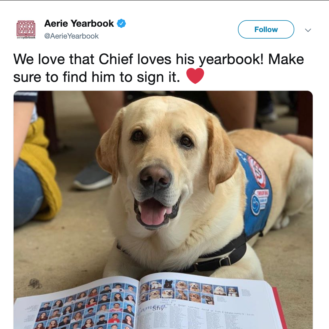 These dogs helped Parkland students cope with tragedy. They got their own yearbook page