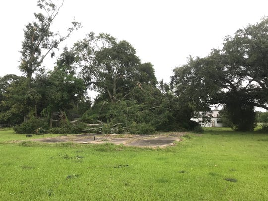 A tree was toppled Sunday morning during a potential tornado in Ville Platte.