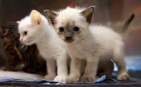 Lost but found kittens wait for owners in Tuscaloosa, Ala. after killer tornadoes on May 12, 2011.