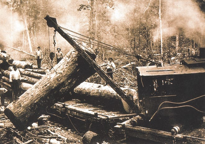 Logging of chestnut trees in what is now Great Smoky Mountains National Park is shown in this undated photo from the early 1900s.