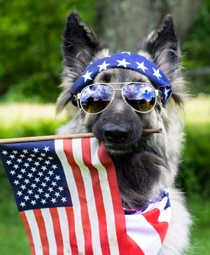 What could be more patriotic than adding a pet to the family for Memorial Day?