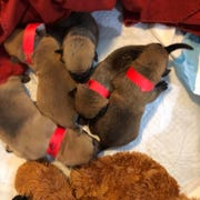 Some of the dogs from Tyner taken in by The Arrow Fund. Pictured are Hodor, Theon, Drogon, Jon Snow, and Samwell.