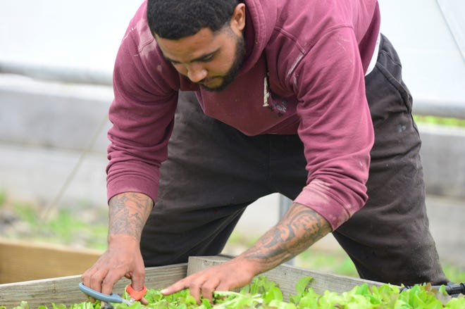 """Sidney Bonham tends to his plot of microgreens at the Mansfield campus of The Ohio State University. The project has been described as a """"microfarm bootcamp"""" to teach the basics of urban gardening."""