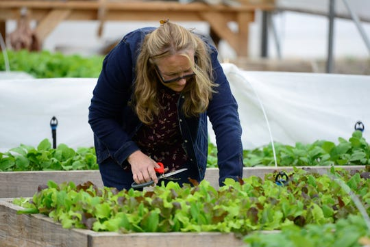 Mona Kneuss trims the top of microgreens on Lot 7 on the Mansfield campus of The Ohio State University on Monday. The microfarm is being used as an educational demonstration space for both OSU students and the community.