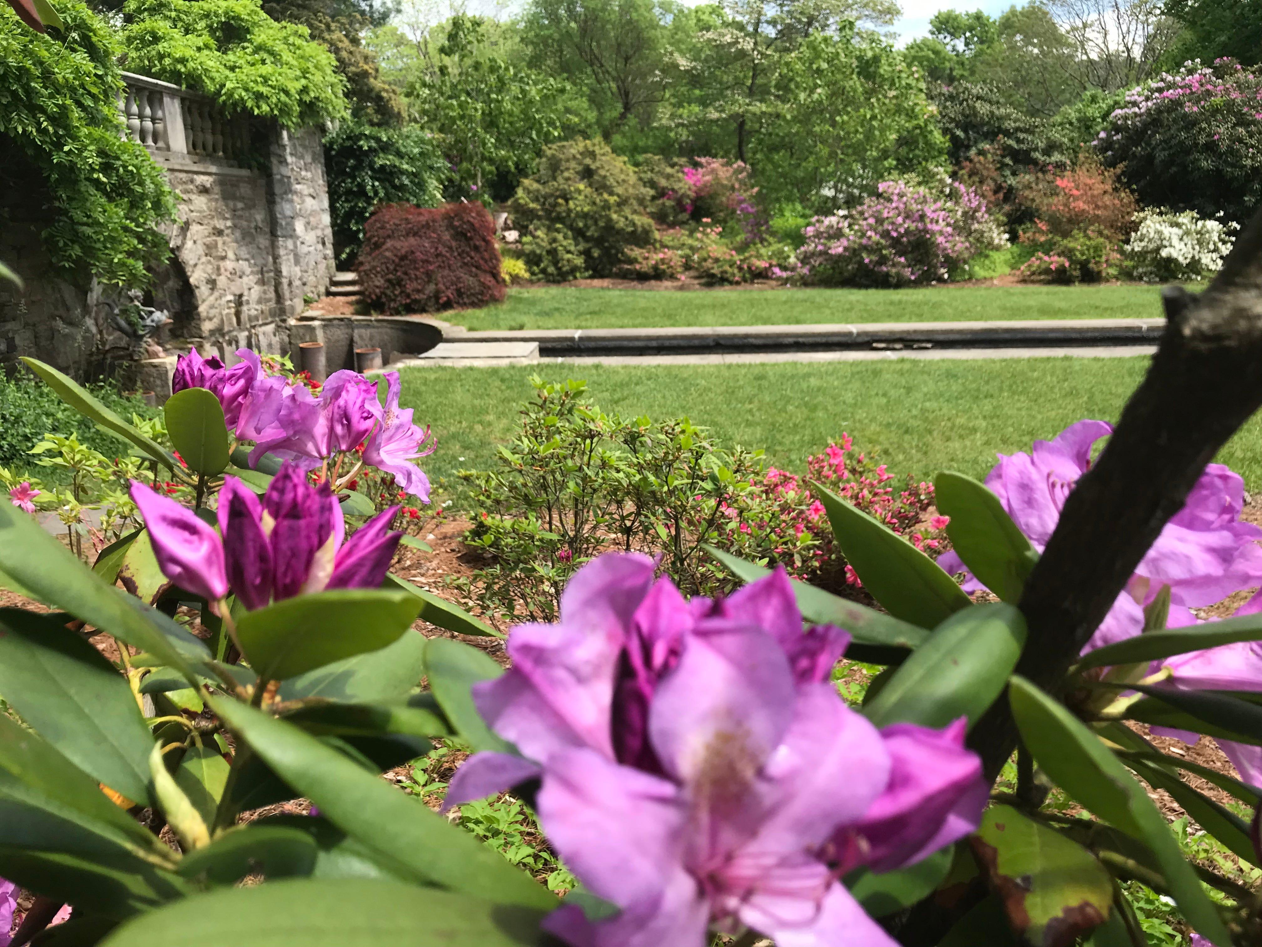 Video: New Jersey Botanical Garden's colorful azaleas bloom