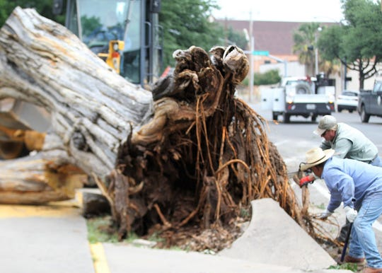 Workers tear down an old, well-known tree outside the Tom Green County Courthouse Monday, May 20, 2019. The tree had to be removed after storm damage early Saturday morning.