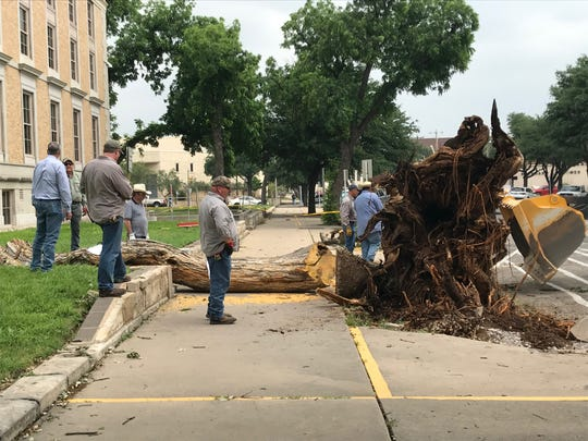 County employees work to remove pieces of a Bois-D'arc tree, which stood outside the Tom Green County courthouse for about 135 years. May 20, 2019.
