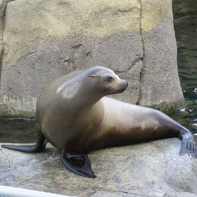 El Paso Zoo to honor late sea lion, Sunny, with plaque Tuesday