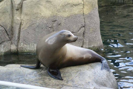 Sunny the Sea Lion was a popular animal at the El Paso Zoo until he passed away in 2012.