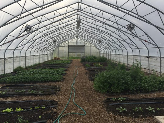 Inside one of six hoop houses at Detroit Public Schools' Drew Farm, radishes, bok choy, cilantro and other veggies grow. School groups from across the district visit the farm for field trips.