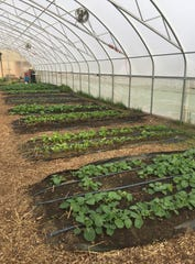 Dozens of different kinds of vegetable, herbs and fruits are grown at Drew Farm for Detroit schools' Office of Nutrition. The farm is funded by the National School Lunch Program.