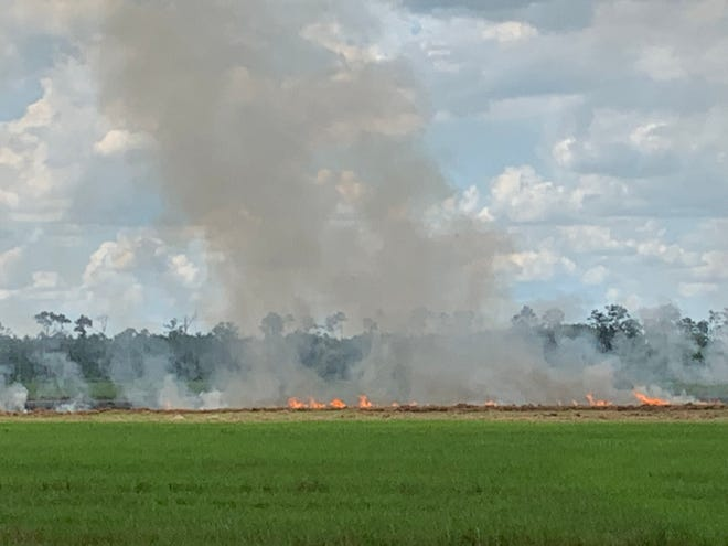 A crew cutting hay in a field at Omni Lane and state Road 82 sparked a fire that spread across the field Tuesday afternoon.