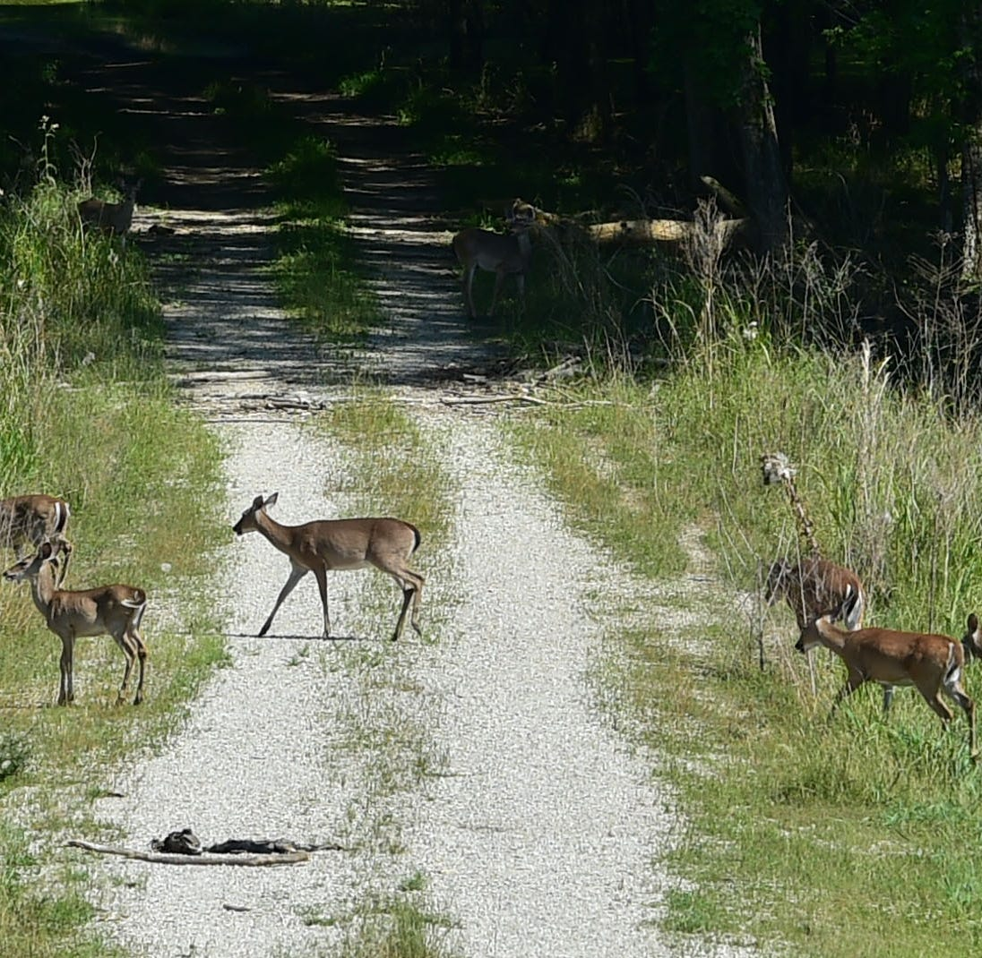 'It's really pitiful': Predators and prey together, struggling to survive floodwaters
