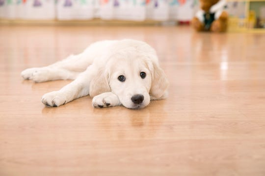 Our dogs and cats are like members of the family, and they often influence our flooring choices. You want to make sure your flooring looks good now, and for years to come.