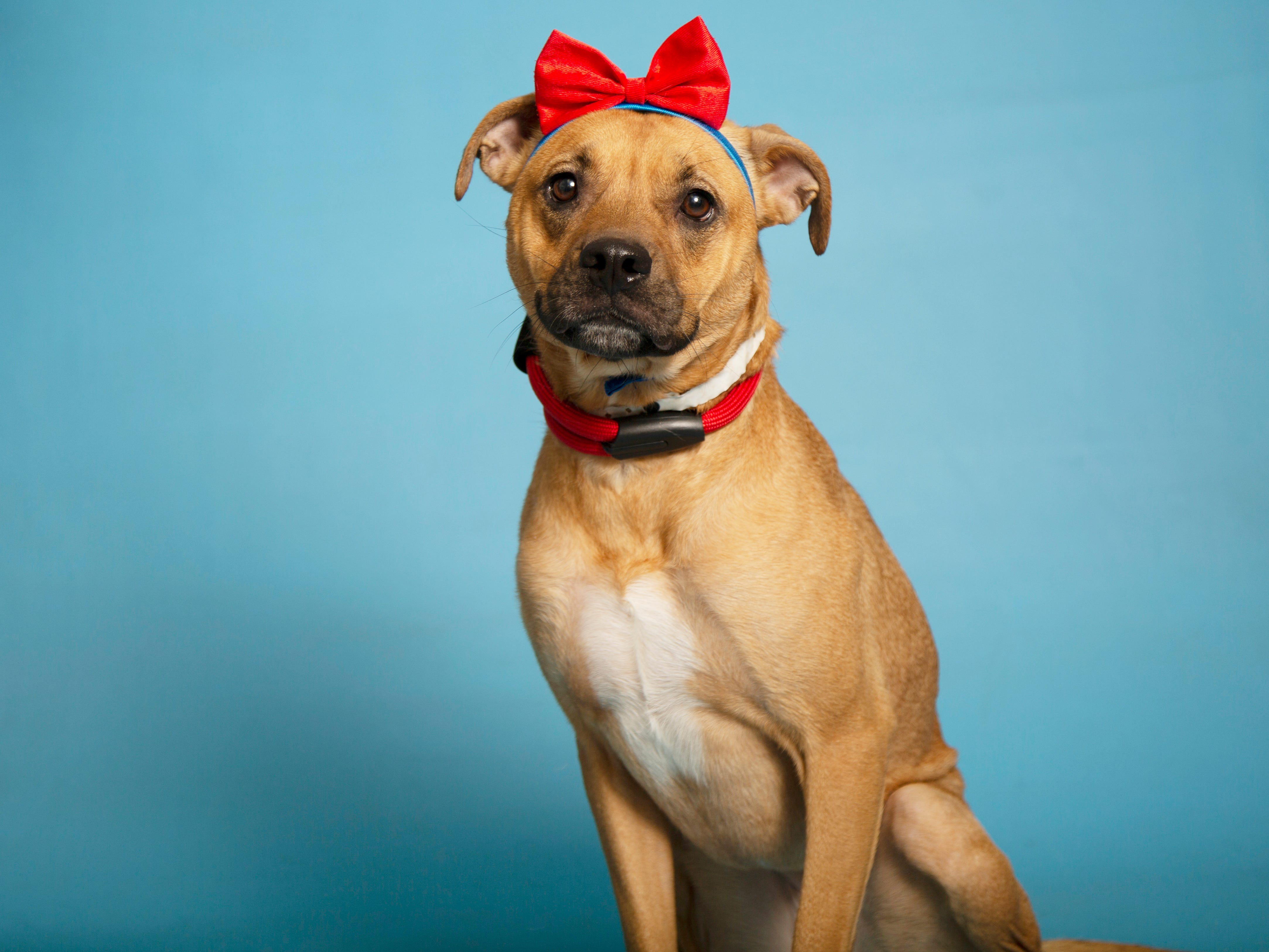 Tamara is available for adoption at 9226 N. 13th Ave. in Phoenix. For more information, visit azhumane.org/adopt.