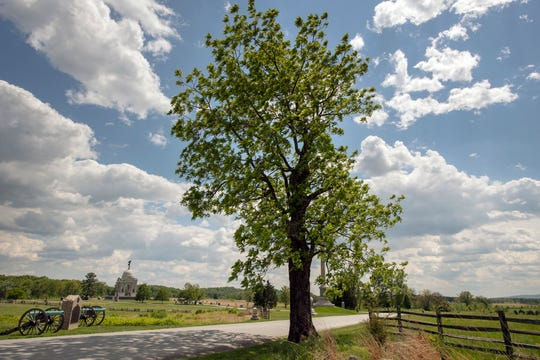 A black walnut tree on Hancock Avenue in Gettysburg provided crucial shade and protection for Union Gen. John Gibbons who was injured while overlooking Pickett's Charge.