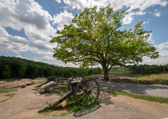 The white oak on Devil's Den in Gettysburg sits in a quick bend in the road. The tree was 10 feet tall July 2, 1863, the second day of the battle.
