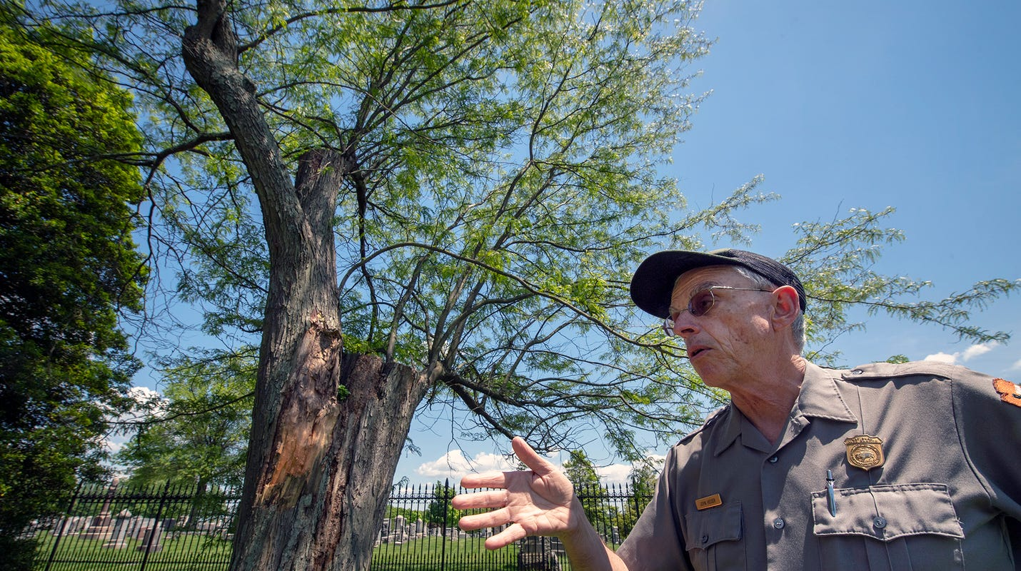 Gettysburg's 'Witness Trees': How Civil-War era honey locust survived, shows US history