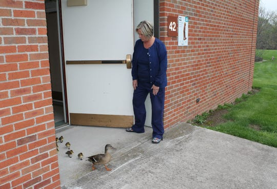 Assistant Nurse Manager Betsy Willard holds the door for a mallard and her ducklings at the end of a corridor at M.M. Ewing Continuing Care Center in Canandaigua.