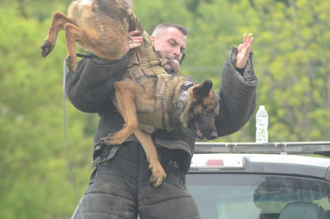 Patrick Peterson, a police dog trainer from the Netherlands upends a police dog during training Wednesday in Marshall.