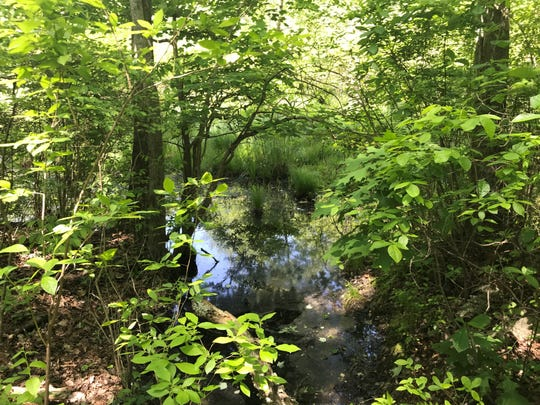In 1975. 16-year-old Betty Jean Belt's body was found in a Helmetta Woods stream like this one. Her murder case never was solved.