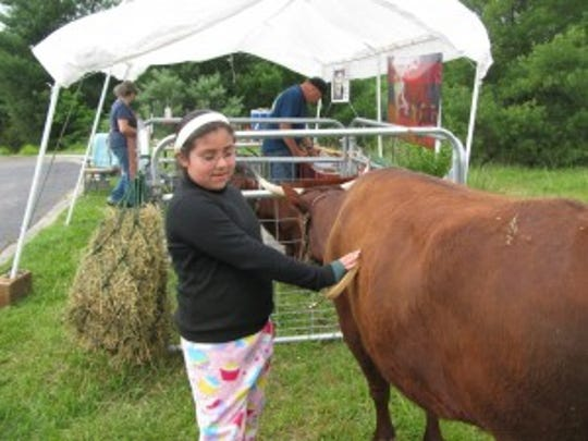 Petting cow