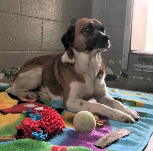Pet of the Week: Meet Andy, faithful companion now homeless