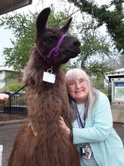 Anne Woodard, Associate Director, Office of Student Financial Services at Ithaca College, with the llama Late for Breakfast.