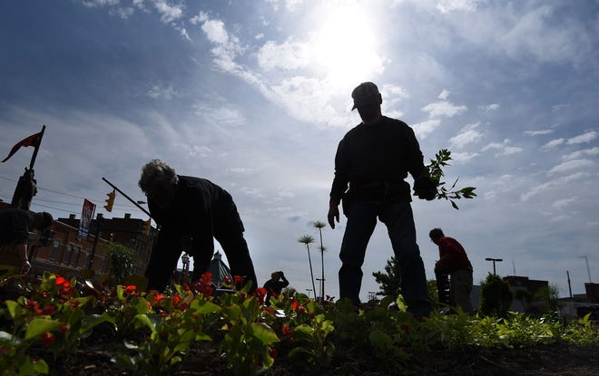 Members of the Mansfield Men's Garden Club plant flowers outside the Richland Carrousel Park on Wednesday morning.