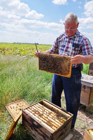 James Rhein is show tending to one of his bee hives in Baxter County.