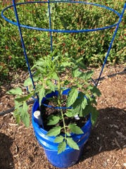 Self-watering containers allow you to continue gardening even if you plan on going on vacation this summer.