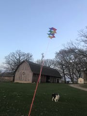 Jack intently watches my box kite, hoping it falls out of the sky so he can nab it.