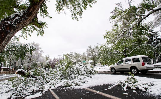 A vehicle drives around a large tree limb blocking a street in Colorado Springs, Colo., on May 21, 2019, after a spring snowstorm.