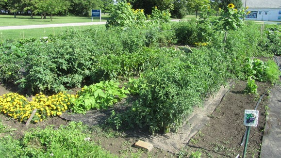 Community gardens can be very productive. This community garden is sponsored by the IHM Sisters in Monroe, Michigan.