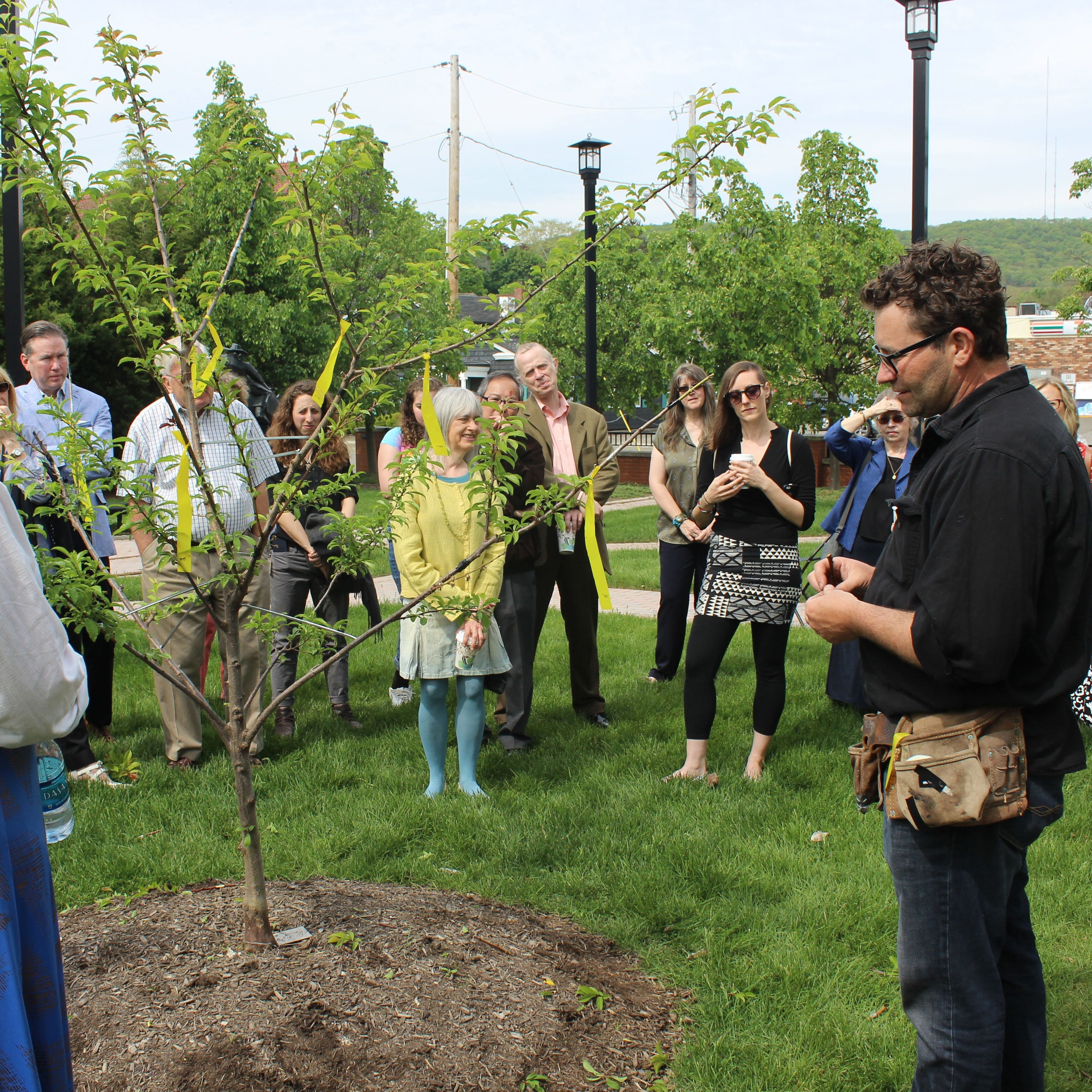 Artist Sam Van Aken, right, unveils his Tree of 40 Fruit No. 87, which is growing in a park across from the Rockwell Museum in Corning.