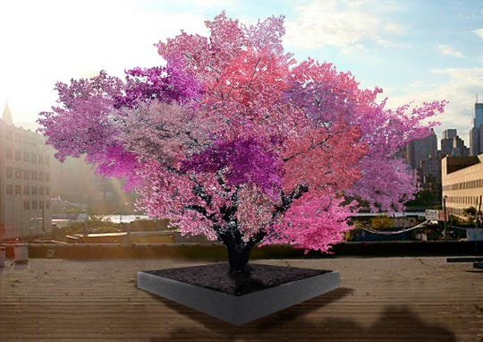This is how the Rockwell Museum's Tree of 40 Fruit will look when it's fully matured.