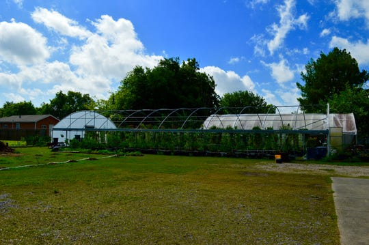 Large greenhouses at the New Iberia Community Garden Co-Op located at Envision da Berry's home headquarters