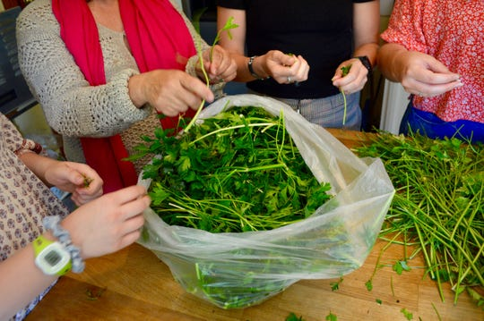 Women pick parsley at Envision da Berry home