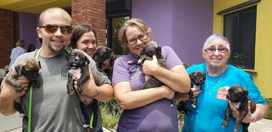 From left, volunteers Brad Hill, Christina Walmer, Kelly Stone and Elaine King load puppies to be transported to Providence Animal Center in Media, Pennsylvania.