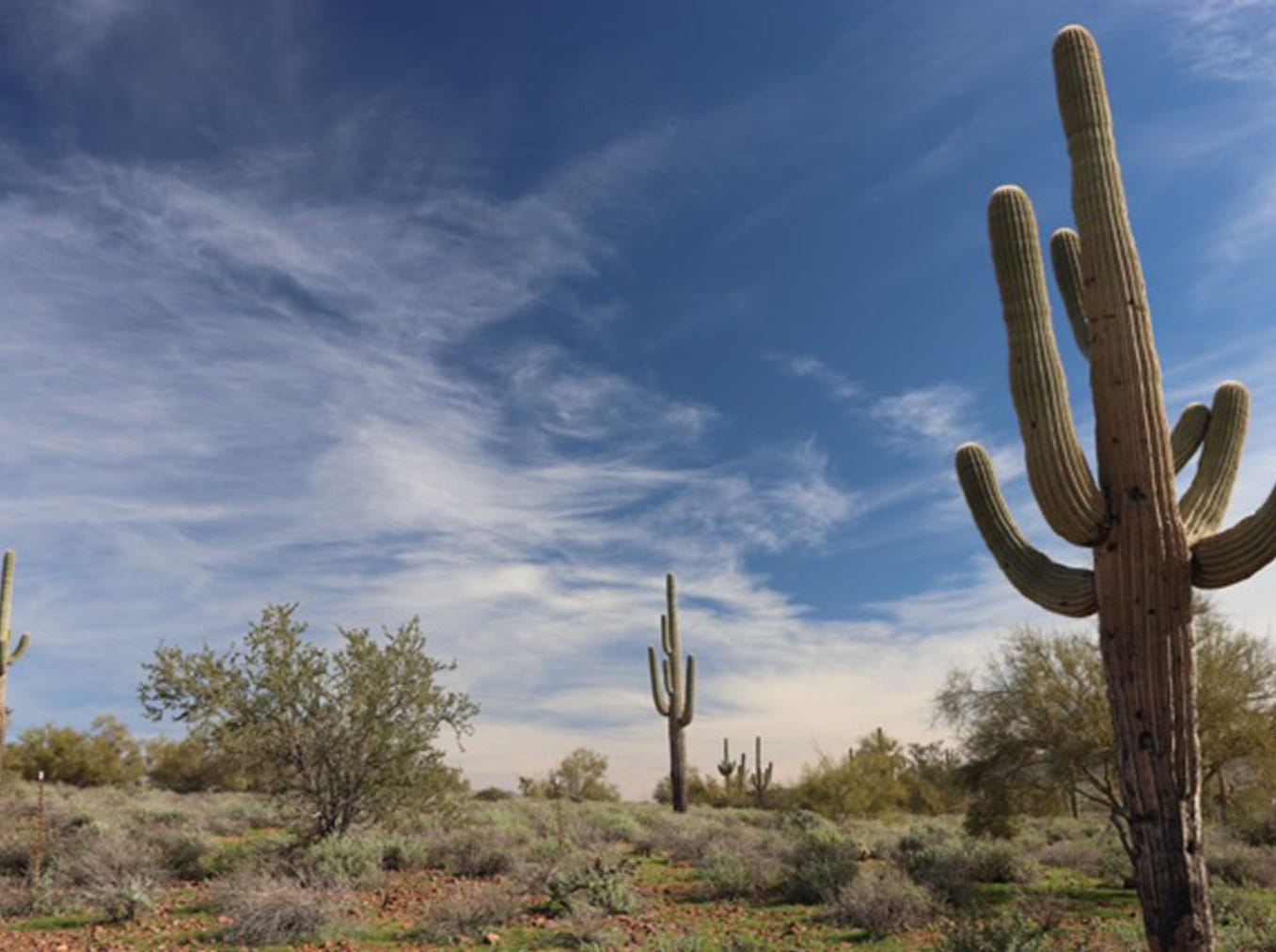 Superstition mountain museum grounds, the leaning Saguaros against the expressive sky, evoked feelings of the west.