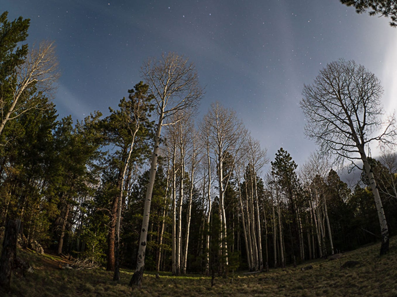 Stars and Aspens in Flagstaff as the full moon rises over the San Francisco Peaks