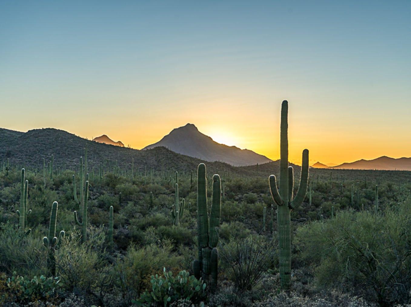 Sunrise Tucson Mountain Park.
