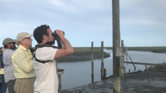 Nature Conservancy fellow Ben Nettleton watches for migrating whimbrels in Machipongo, Virginia on Wednesday, May 22, 2019.