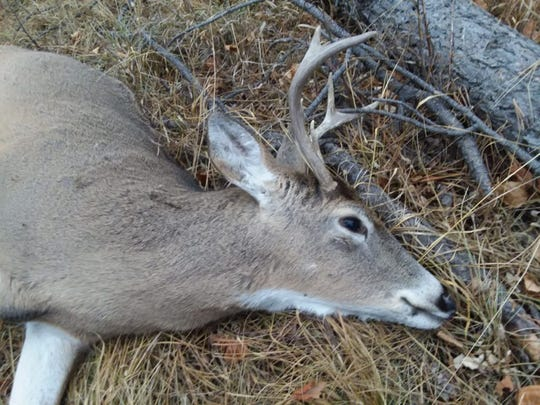 Whitetail deer are the most populous and widely hunted deer species in North America, but scientists worry that Chronic Wasting Disease may pose a long-term threat to deer herds. In South Dakota, deer hunters spent more than $160 million during the 2015 hunting season.