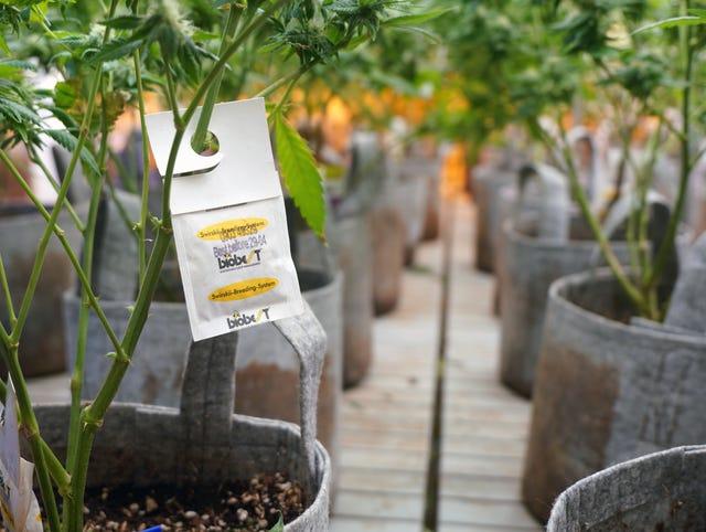 Legal weed: Illinois approves recreational marijuana