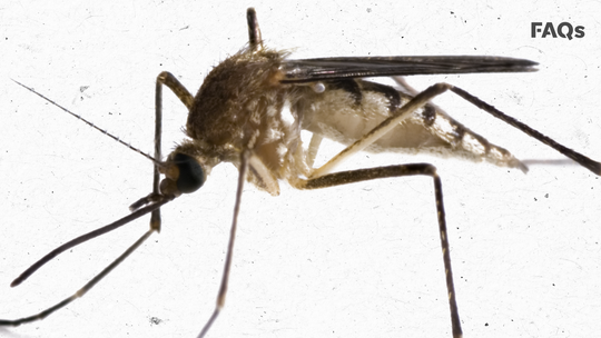 Lyme disease, spread by ticks, and West Nile virus, spread by mosquitoes, are the most common diseases spread by these pests in Wisconsin.