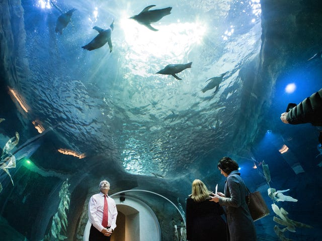Detroit Zoo's penguin center to close for 9 months