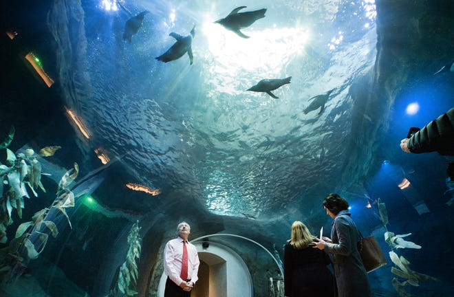 In 2016, Detroit Zoo visitation peaked at 1.7 million after the opening of the Polk Penguin Conservation Center.