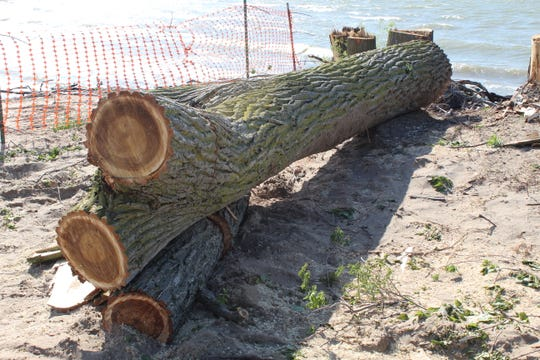 Port Clinton city workers cut down several trees adjacent to the closed City Beach as local officials continue to struggle with shoreline erosion and coastal flooding.