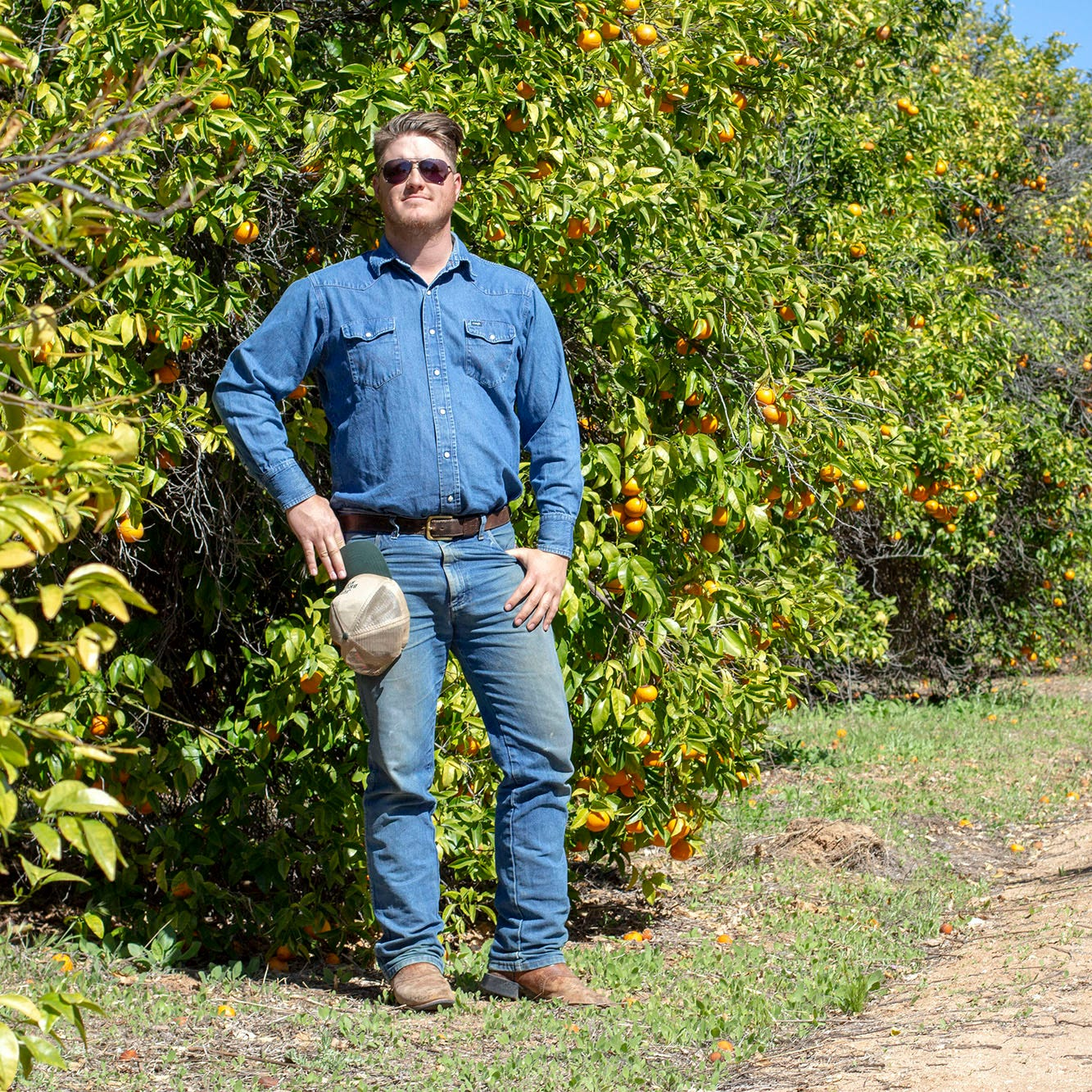 Citrus squeeze: Pushed by development, costs, citrus shrinks in state economy